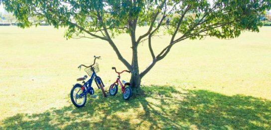 木陰と自転車
