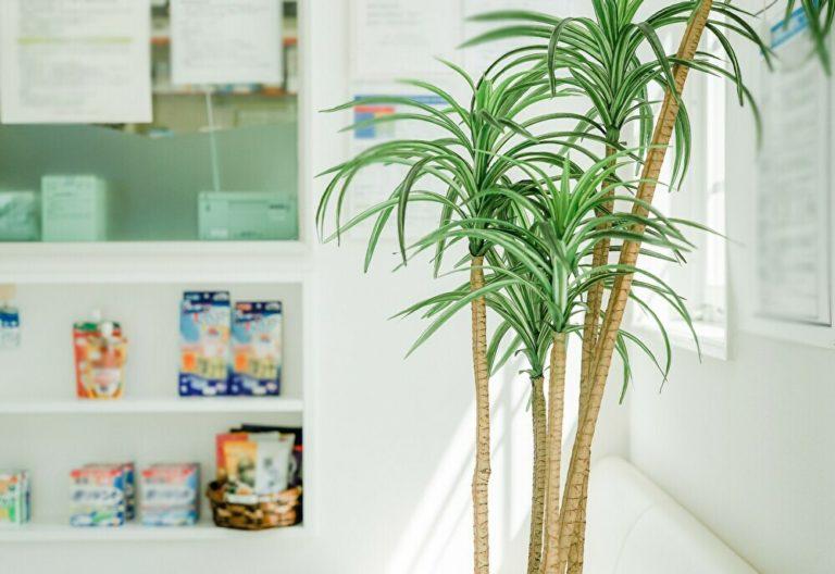 商品棚と緑の観葉植物